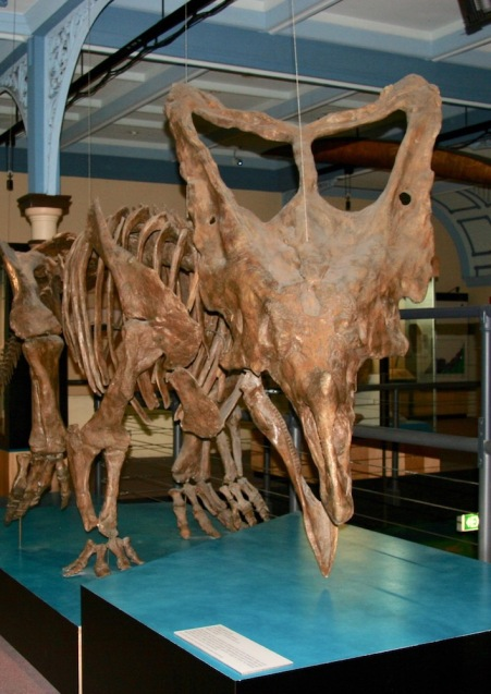 A Chasmosaur